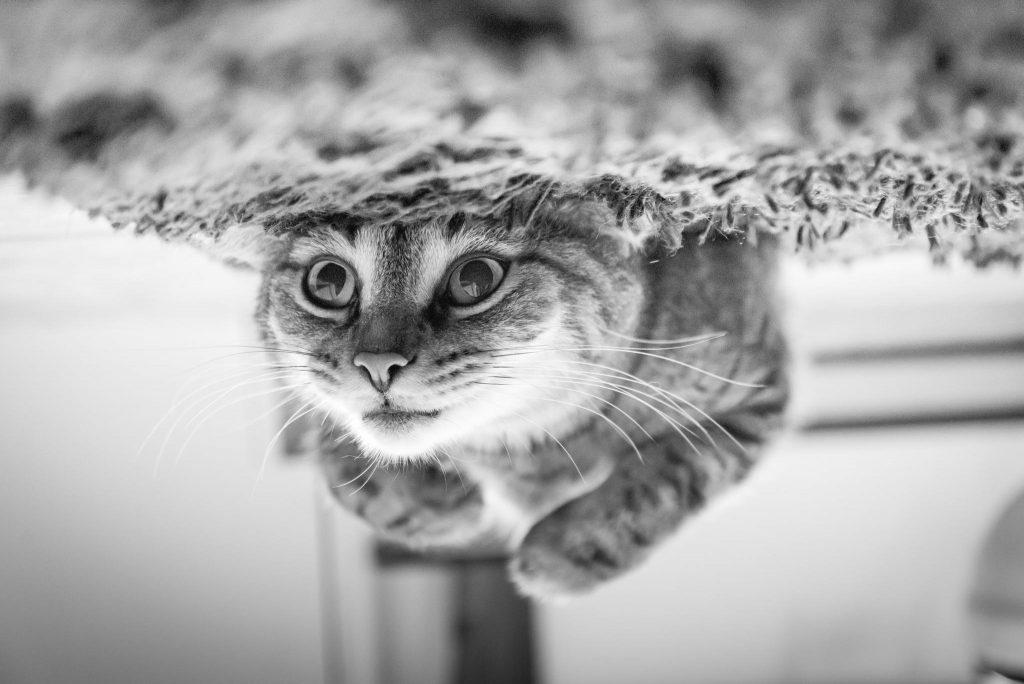 Veterinario de gatos malaga