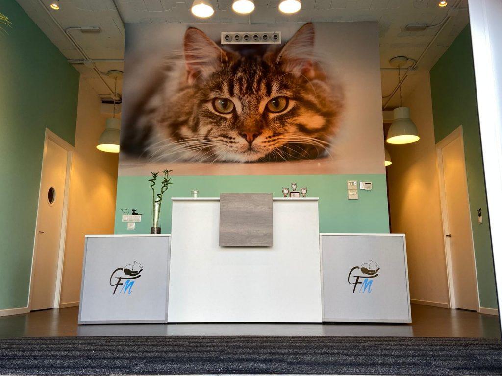 Veterinario gatos malaga